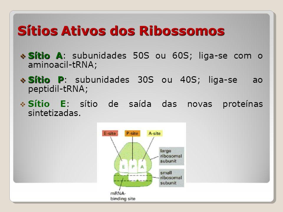 Pareamento entre rRNA e Ribossomo Para o início da síntese proteica precisa ocorrer a ligação entre o mRNA e o ribossomo: Procarioto Sítio de ligação do ribossomo (RBS): Sequência de mRNA que é recoberta pelo ribossomo; O códon de iniciação AUG está contida na sequência; Shine-Delgarno mRNA possui uma sequência parcialmente complementar à uma região do rRNA, denominada Shine-Delgarno.
