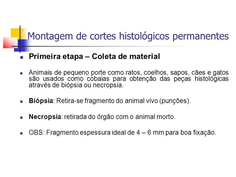 Montagem de cortes histológicos permanentes Primeira etapa – Coleta de material Animais de pequeno porte como ratos, coelhos, sapos, cães e gatos são