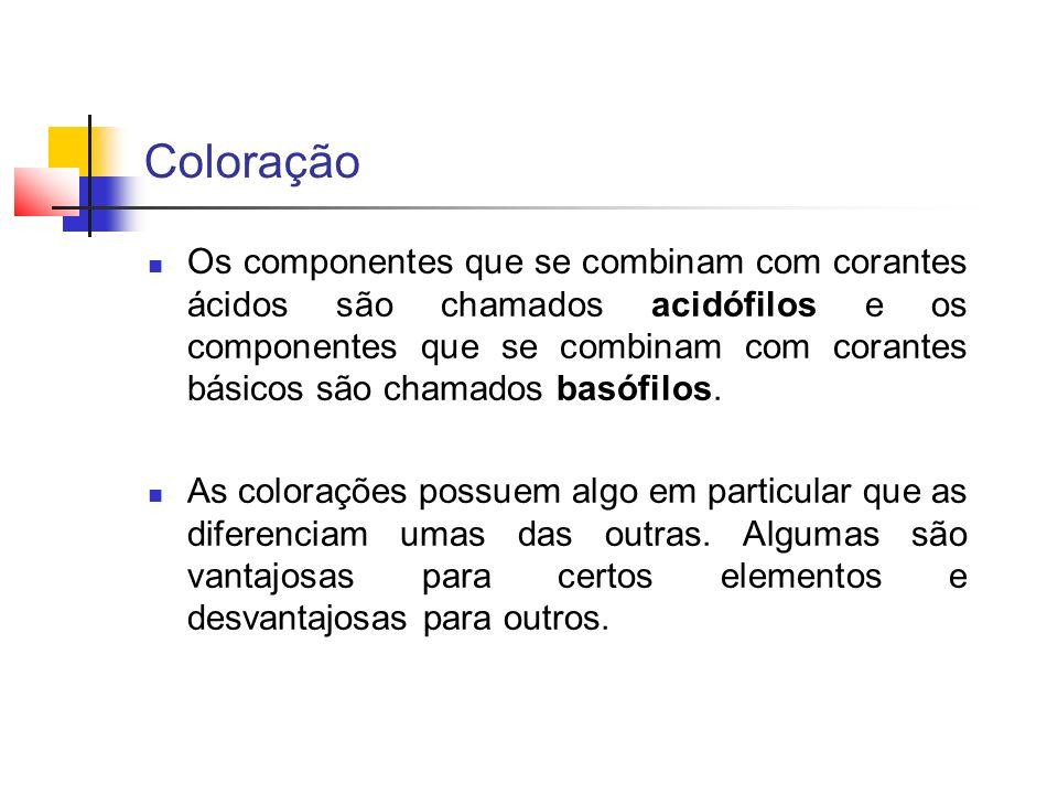 Coloração Os componentes que se combinam com corantes ácidos são chamados acidófilos e os componentes que se combinam com corantes básicos são chamado
