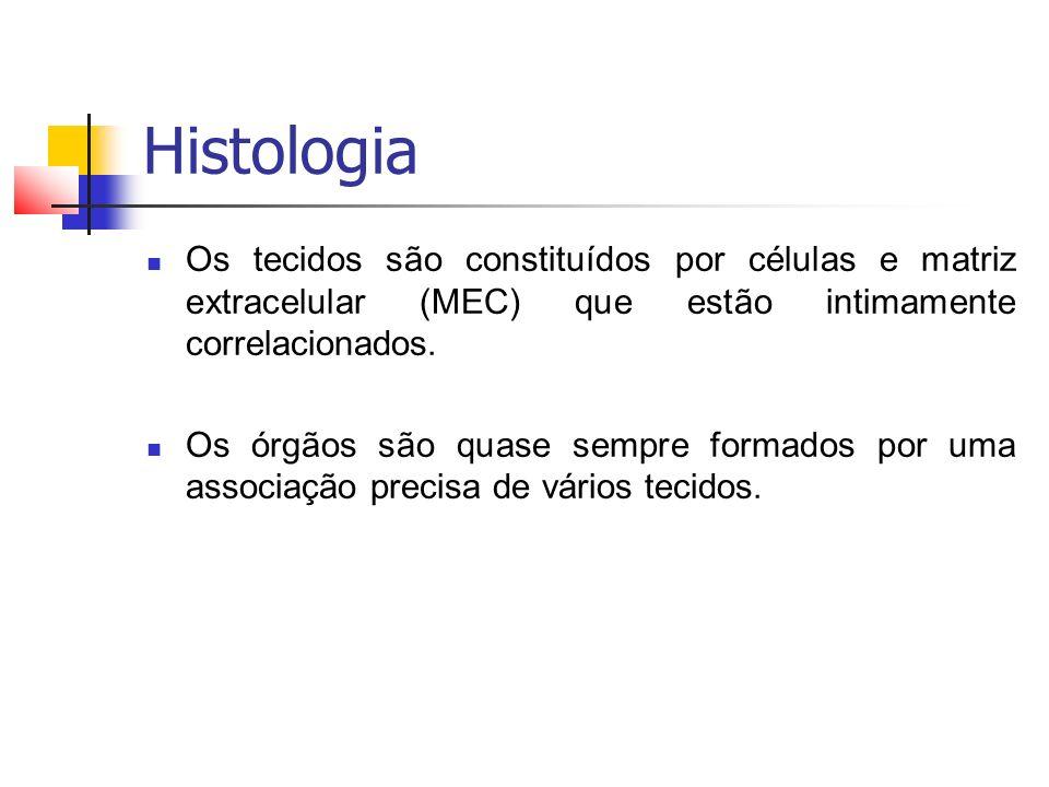 Histologia Tipos de tecidos fundamentais: Tecido epitelial Tecido conjuntivo Tecido nervoso Tecido muscular