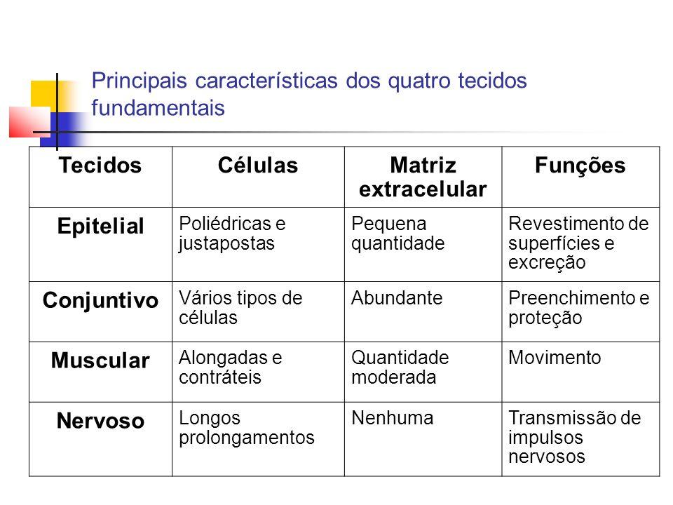 Principais características dos quatro tecidos fundamentais TecidosCélulasMatriz extracelular Funções Epitelial Poliédricas e justapostas Pequena quant