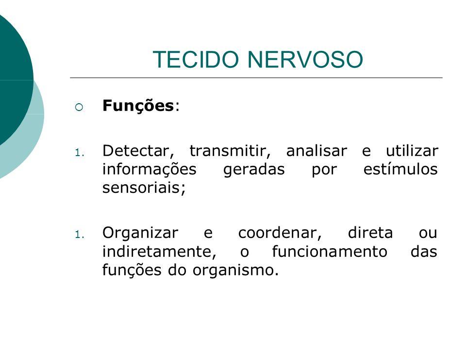 TECIDO NERVOSO Funções: 1. Detectar, transmitir, analisar e utilizar informações geradas por estímulos sensoriais; 1. Organizar e coordenar, direta ou