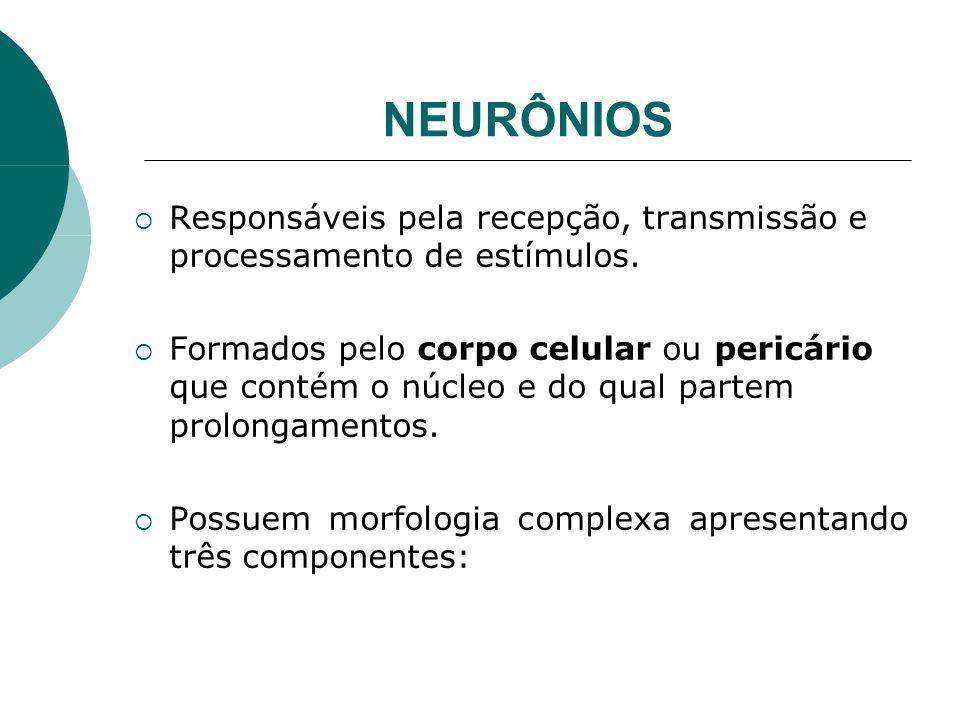 NEURÔNIOS Responsáveis pela recepção, transmissão e processamento de estímulos. Formados pelo corpo celular ou pericário que contém o núcleo e do qual
