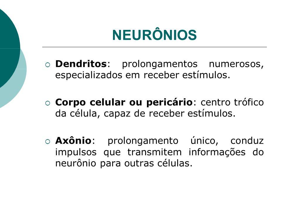 NEURÔNIOS Dendritos: prolongamentos numerosos, especializados em receber estímulos. Corpo celular ou pericário: centro trófico da célula, capaz de rec