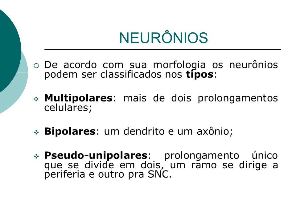 NEURÔNIOS De acordo com sua morfologia os neurônios podem ser classificados nos tipos: Multipolares: mais de dois prolongamentos celulares; Bipolares: