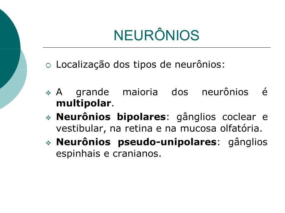 NEURÔNIOS Localização dos tipos de neurônios: A grande maioria dos neurônios é multipolar. Neurônios bipolares: gânglios coclear e vestibular, na reti