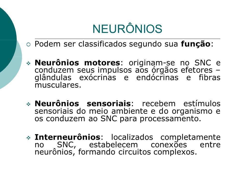 NEURÔNIOS Podem ser classificados segundo sua função: Neurônios motores: originam-se no SNC e conduzem seus impulsos aos órgãos efetores – glândulas e