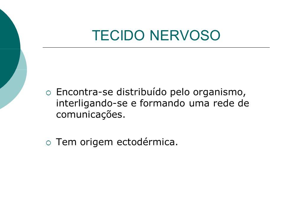 TECIDO NERVOSO Encontra-se distribuído pelo organismo, interligando-se e formando uma rede de comunicações. Tem origem ectodérmica.