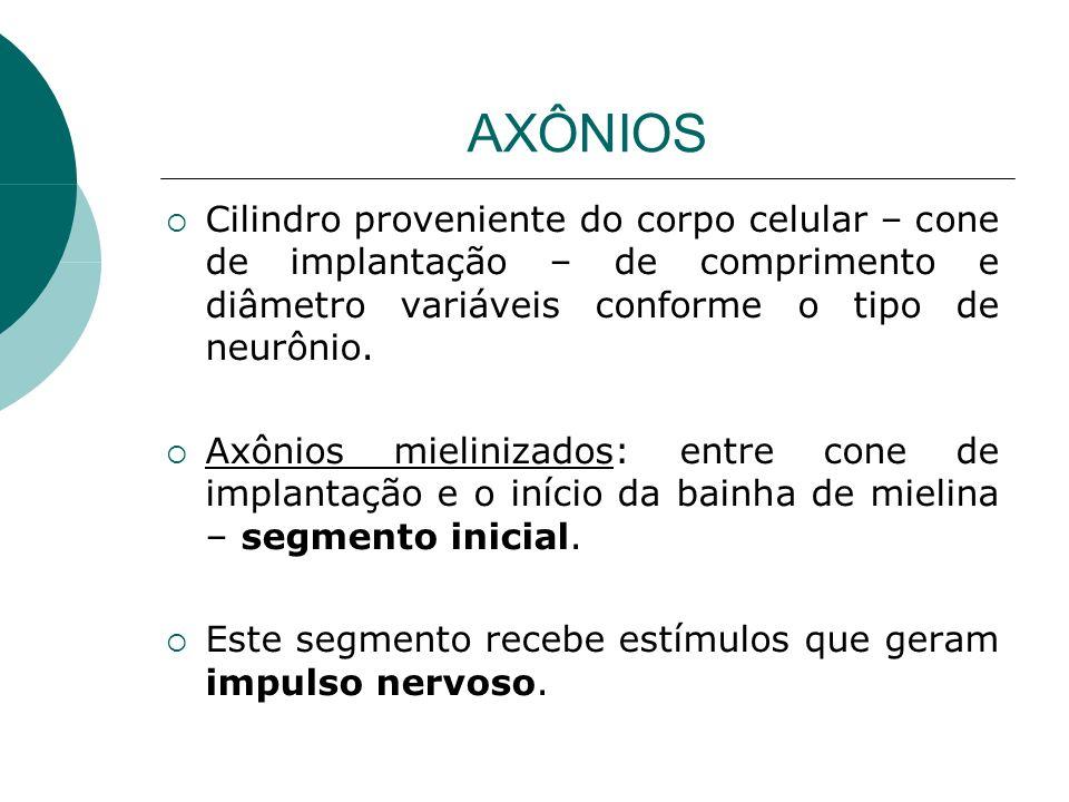 AXÔNIOS Cilindro proveniente do corpo celular – cone de implantação – de comprimento e diâmetro variáveis conforme o tipo de neurônio. Axônios mielini