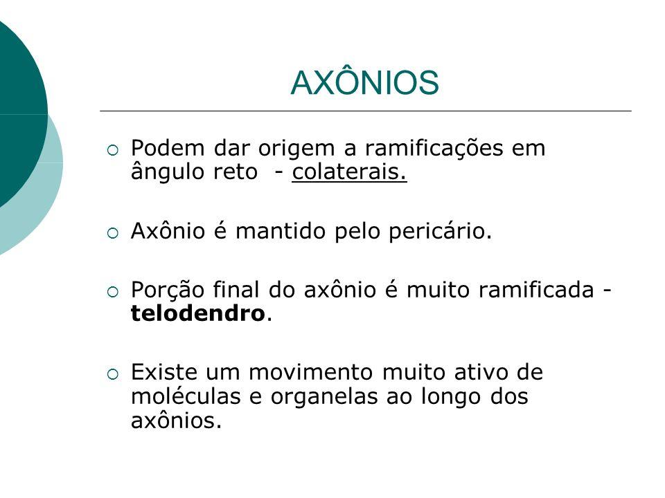 AXÔNIOS Podem dar origem a ramificações em ângulo reto - colaterais. Axônio é mantido pelo pericário. Porção final do axônio é muito ramificada - telo