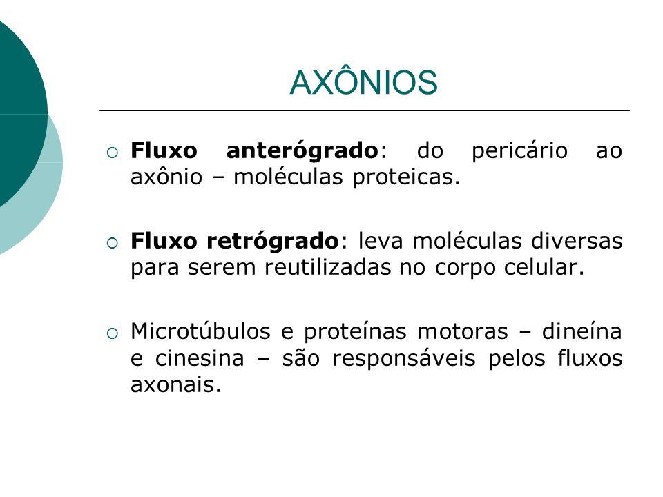 AXÔNIOS Fluxo anterógrado: do pericário ao axônio – moléculas proteicas. Fluxo retrógrado: leva moléculas diversas para serem reutilizadas no corpo ce