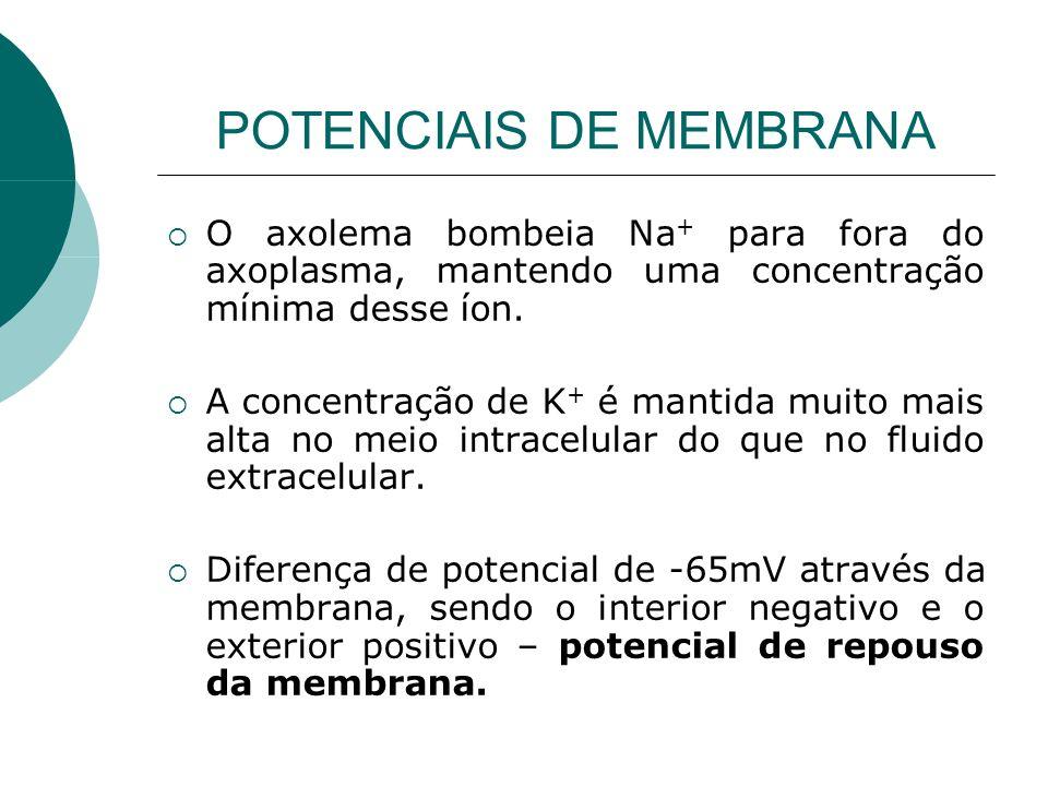POTENCIAIS DE MEMBRANA O axolema bombeia Na + para fora do axoplasma, mantendo uma concentração mínima desse íon. A concentração de K + é mantida muit
