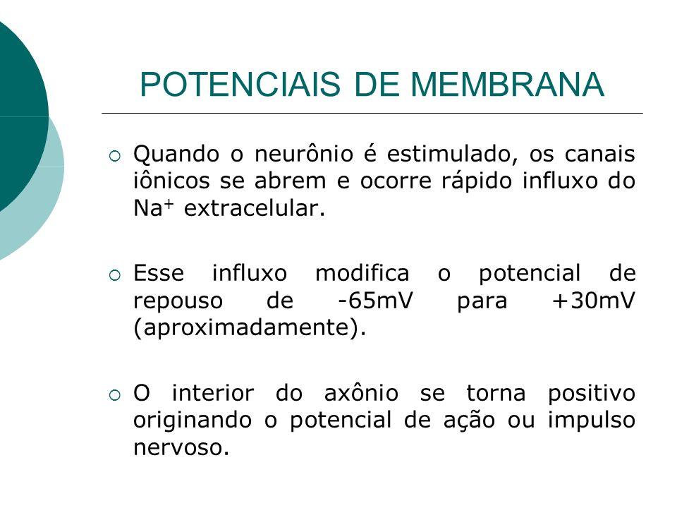 POTENCIAIS DE MEMBRANA Quando o neurônio é estimulado, os canais iônicos se abrem e ocorre rápido influxo do Na + extracelular. Esse influxo modifica