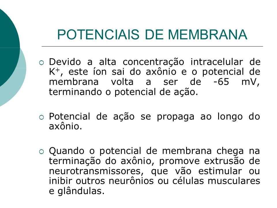 POTENCIAIS DE MEMBRANA Devido a alta concentração intracelular de K +, este íon sai do axônio e o potencial de membrana volta a ser de -65 mV, termina