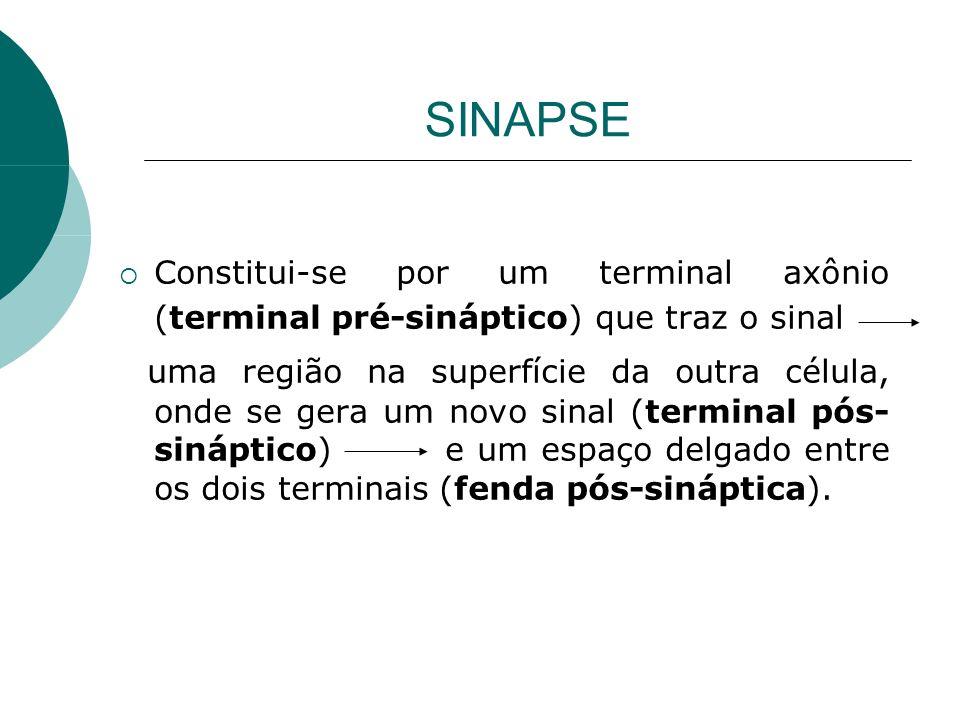 SINAPSE Constitui-se por um terminal axônio (terminal pré-sináptico) que traz o sinal uma região na superfície da outra célula, onde se gera um novo s