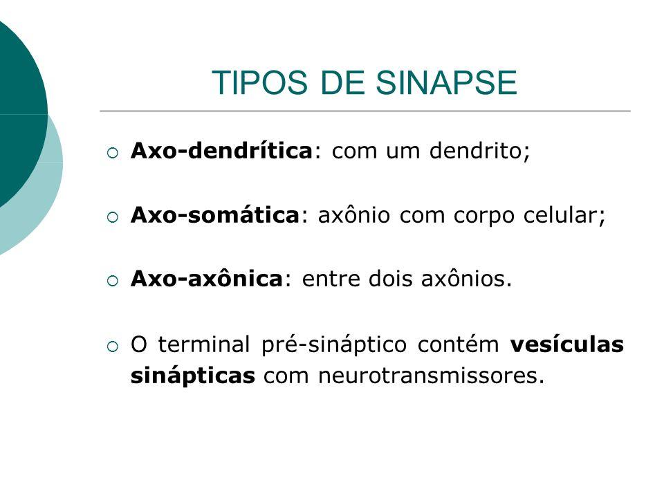 TIPOS DE SINAPSE Axo-dendrítica: com um dendrito; Axo-somática: axônio com corpo celular; Axo-axônica: entre dois axônios. O terminal pré-sináptico co