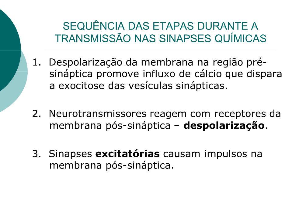 SEQUÊNCIA DAS ETAPAS DURANTE A TRANSMISSÃO NAS SINAPSES QUÍMICAS 1. Despolarização da membrana na região pré- sináptica promove influxo de cálcio que