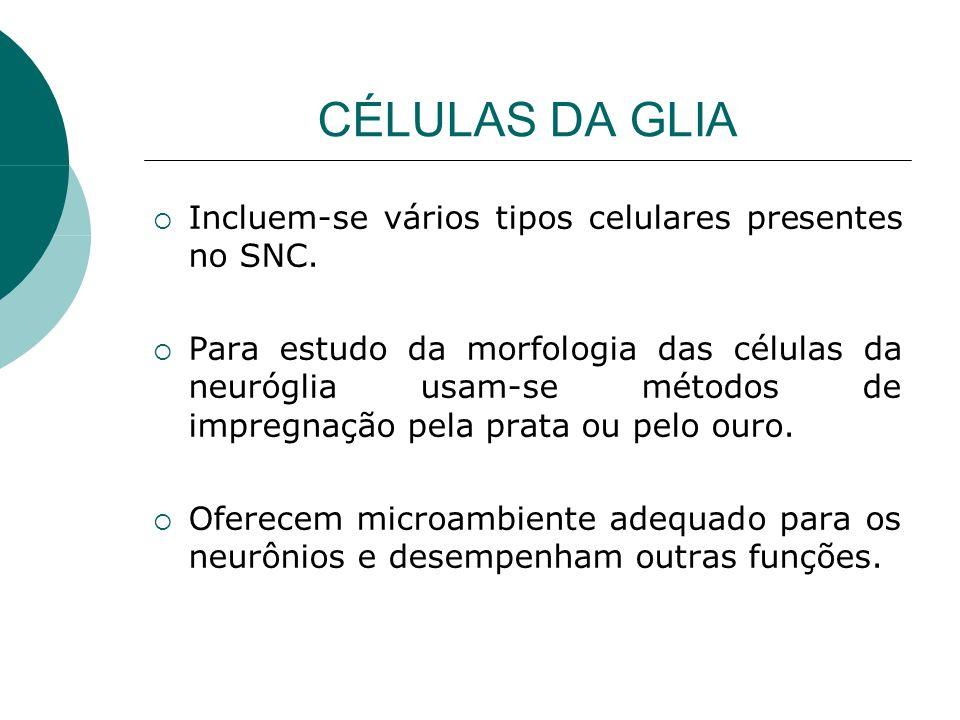 CÉLULAS DA GLIA Incluem-se vários tipos celulares presentes no SNC. Para estudo da morfologia das células da neuróglia usam-se métodos de impregnação
