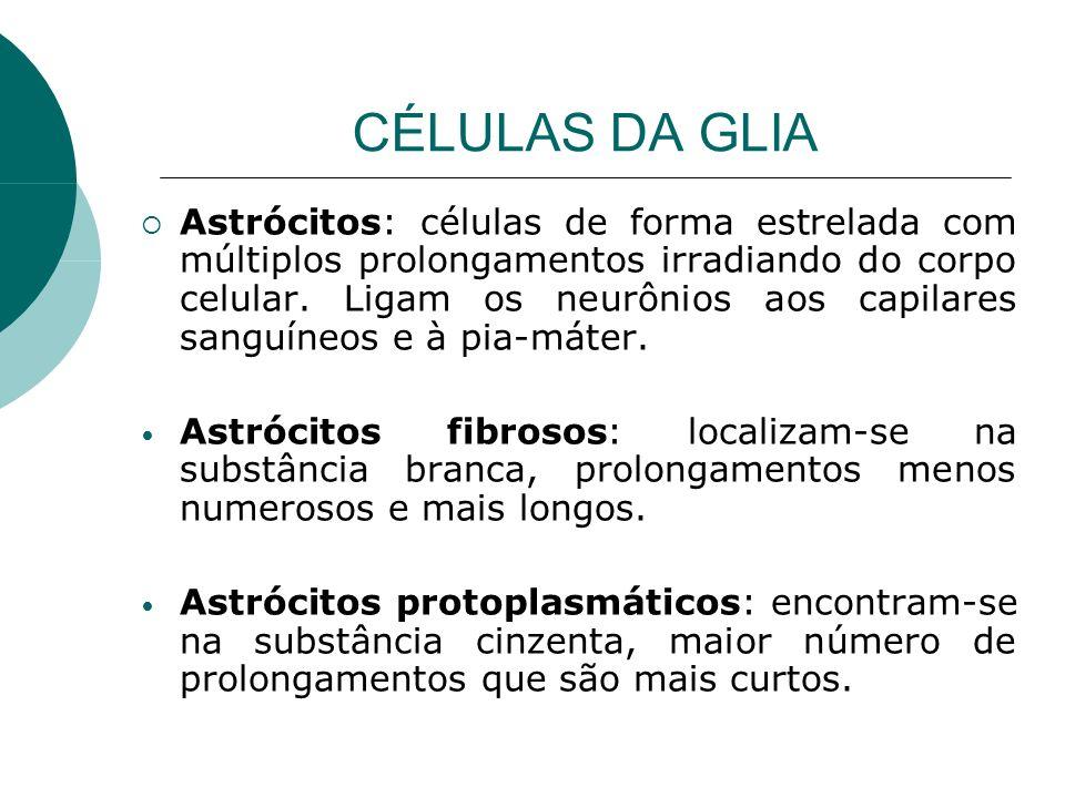 CÉLULAS DA GLIA Astrócitos: células de forma estrelada com múltiplos prolongamentos irradiando do corpo celular. Ligam os neurônios aos capilares sang