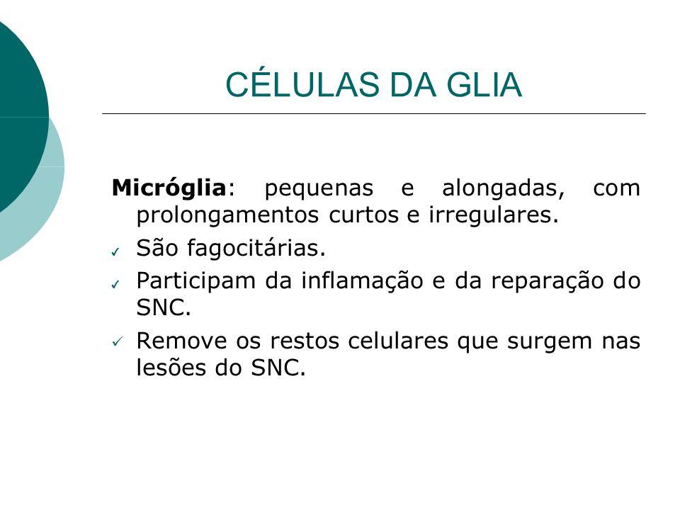 CÉLULAS DA GLIA Micróglia: pequenas e alongadas, com prolongamentos curtos e irregulares. São fagocitárias. Participam da inflamação e da reparação do