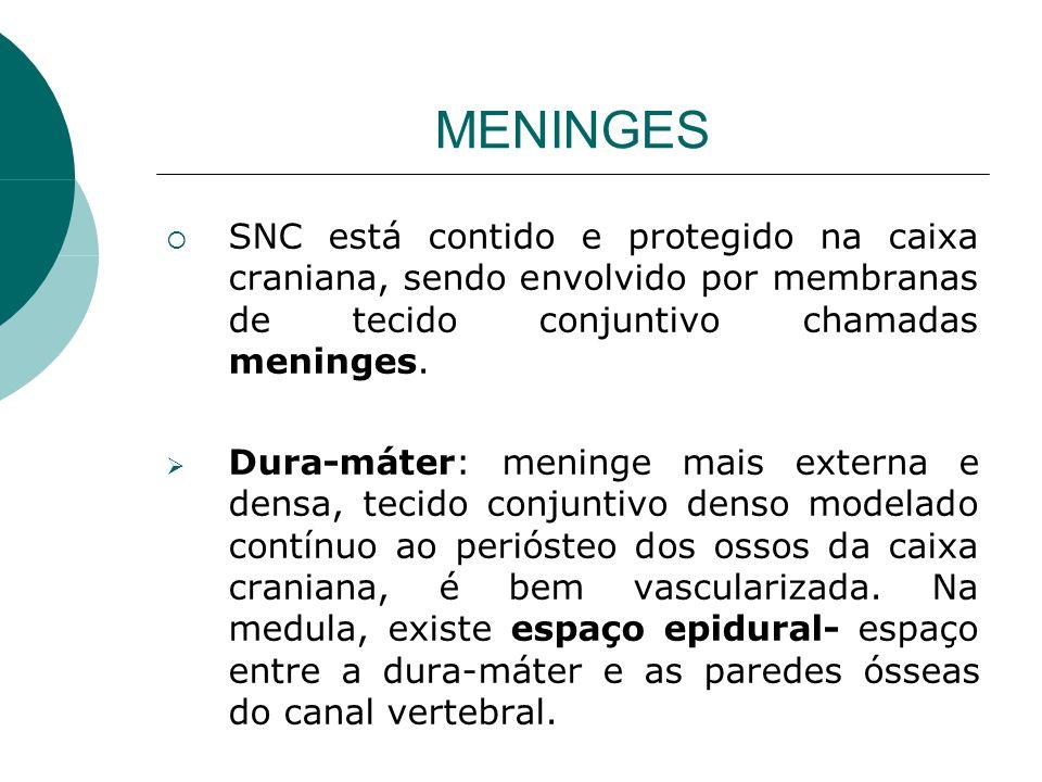 MENINGES SNC está contido e protegido na caixa craniana, sendo envolvido por membranas de tecido conjuntivo chamadas meninges. Dura-máter: meninge mai