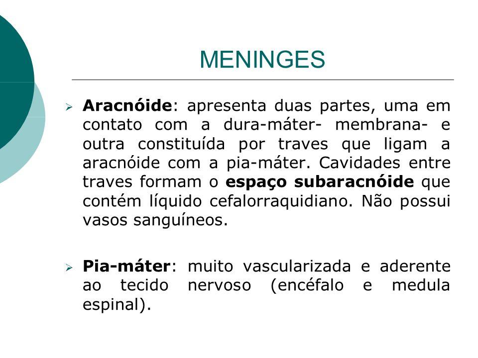 MENINGES Aracnóide: apresenta duas partes, uma em contato com a dura-máter- membrana- e outra constituída por traves que ligam a aracnóide com a pia-m