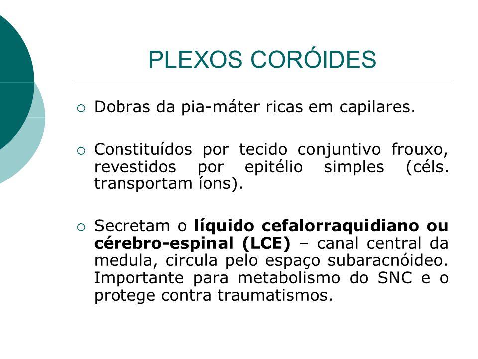 PLEXOS CORÓIDES Dobras da pia-máter ricas em capilares. Constituídos por tecido conjuntivo frouxo, revestidos por epitélio simples (céls. transportam