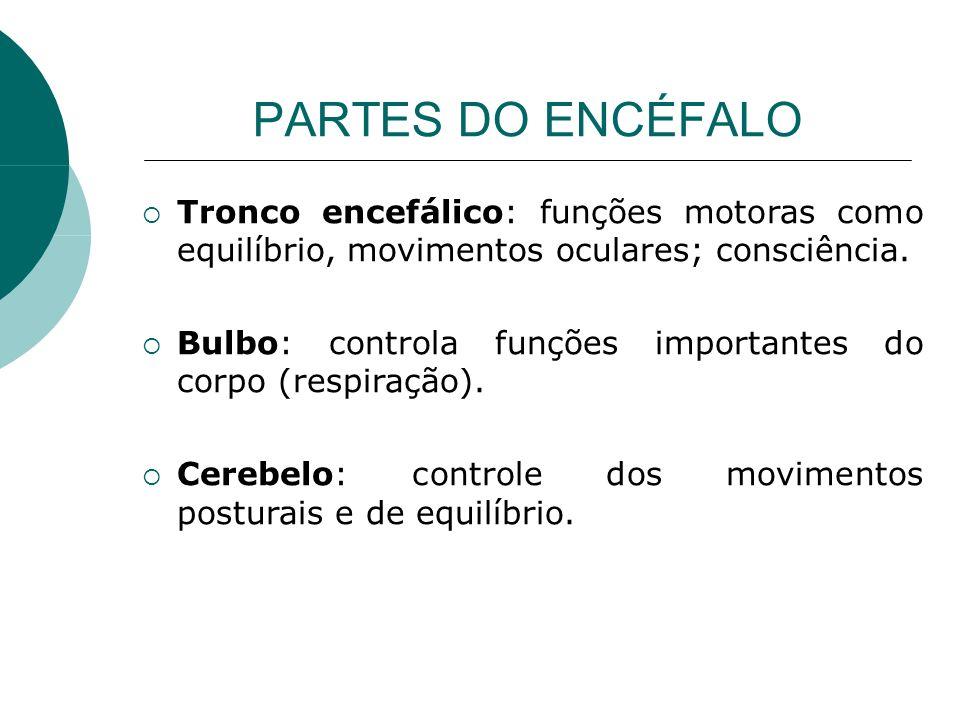 PARTES DO ENCÉFALO Tronco encefálico: funções motoras como equilíbrio, movimentos oculares; consciência. Bulbo: controla funções importantes do corpo