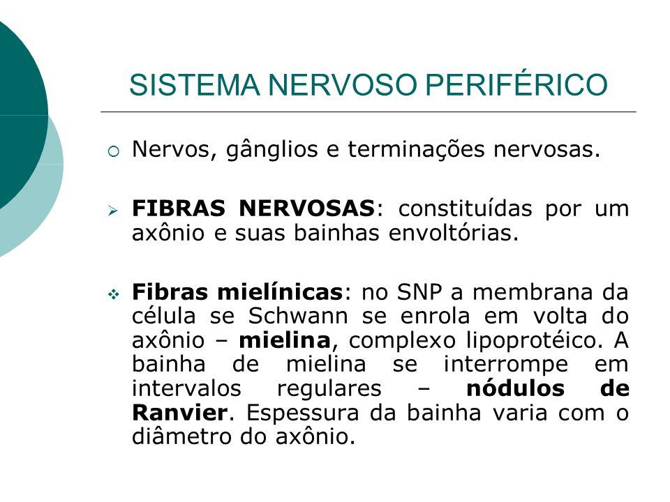 SISTEMA NERVOSO PERIFÉRICO Nervos, gânglios e terminações nervosas. FIBRAS NERVOSAS: constituídas por um axônio e suas bainhas envoltórias. Fibras mie