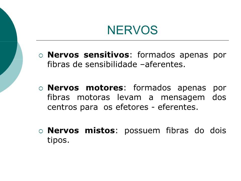 NERVOS Nervos sensitivos: formados apenas por fibras de sensibilidade –aferentes. Nervos motores: formados apenas por fibras motoras levam a mensagem