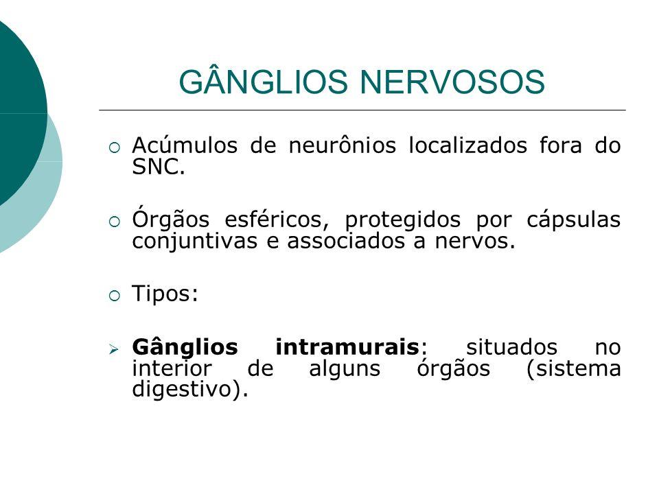 GÂNGLIOS NERVOSOS Acúmulos de neurônios localizados fora do SNC. Órgãos esféricos, protegidos por cápsulas conjuntivas e associados a nervos. Tipos: G