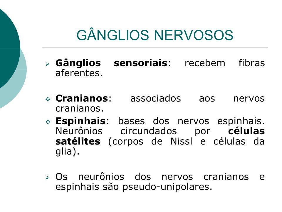 GÂNGLIOS NERVOSOS Gânglios sensoriais: recebem fibras aferentes. Cranianos: associados aos nervos cranianos. Espinhais: bases dos nervos espinhais. Ne