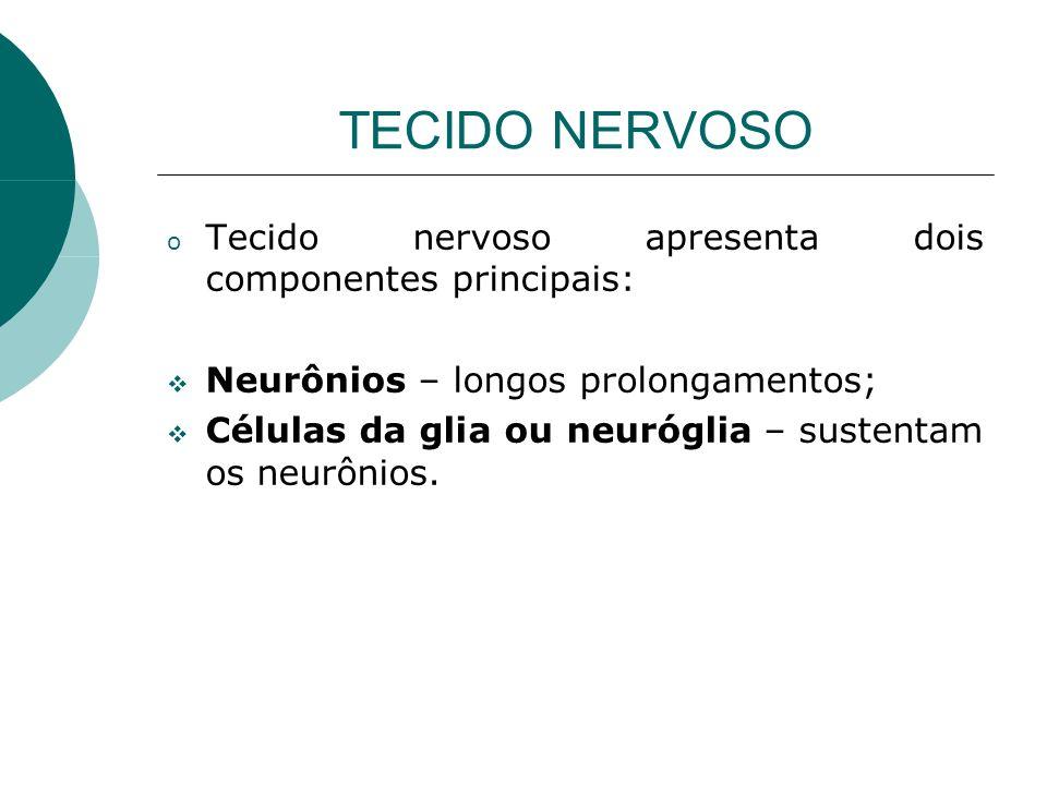 TECIDO NERVOSO o Tecido nervoso apresenta dois componentes principais: Neurônios – longos prolongamentos; Células da glia ou neuróglia – sustentam os