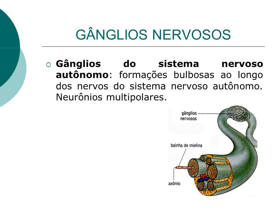 GÂNGLIOS NERVOSOS Gânglios do sistema nervoso autônomo: formações bulbosas ao longo dos nervos do sistema nervoso autônomo. Neurônios multipolares.