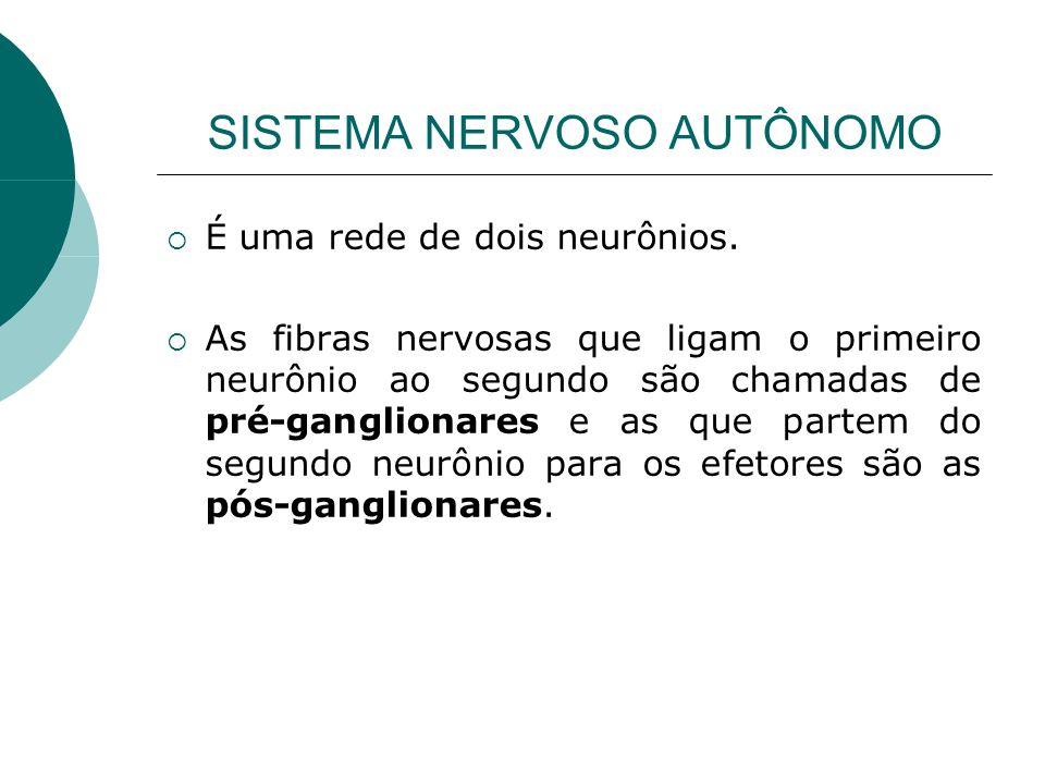 SISTEMA NERVOSO AUTÔNOMO É uma rede de dois neurônios. As fibras nervosas que ligam o primeiro neurônio ao segundo são chamadas de pré-ganglionares e