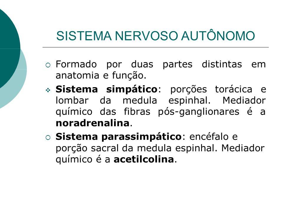 SISTEMA NERVOSO AUTÔNOMO Formado por duas partes distintas em anatomia e função. Sistema simpático: porções torácica e lombar da medula espinhal. Medi