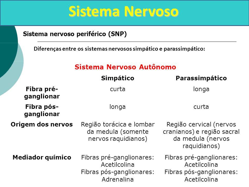 Sistema Nervoso Sistema nervoso periférico (SNP) Diferenças entre os sistemas nervosos simpático e parassimpático: Sistema Nervoso Autônomo SimpáticoP
