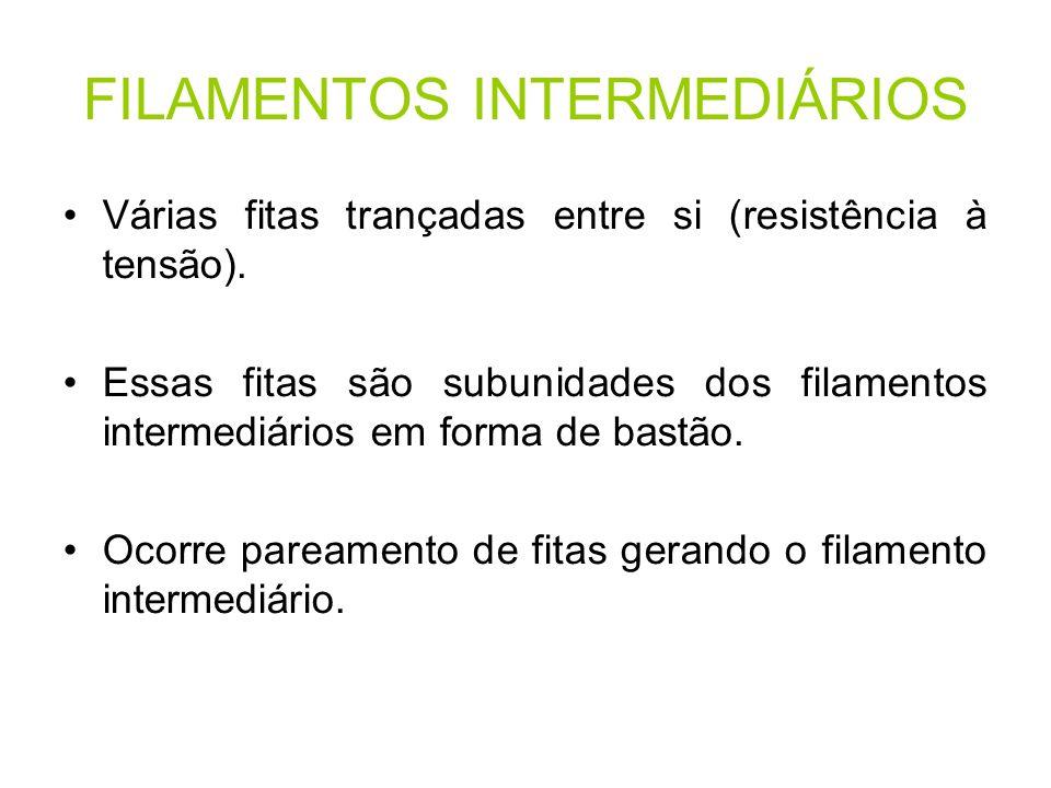 FILAMENTOS INTERMEDIÁRIOS Várias fitas trançadas entre si (resistência à tensão). Essas fitas são subunidades dos filamentos intermediários em forma d