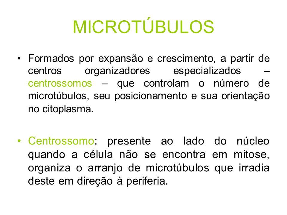 MICROTÚBULOS Formados por expansão e crescimento, a partir de centros organizadores especializados – centrossomos – que controlam o número de microtúb