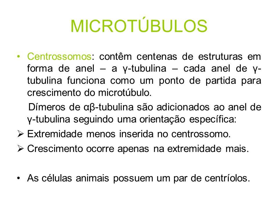 MICROTÚBULOS Centrossomos: contêm centenas de estruturas em forma de anel – a γ-tubulina – cada anel de γ- tubulina funciona como um ponto de partida