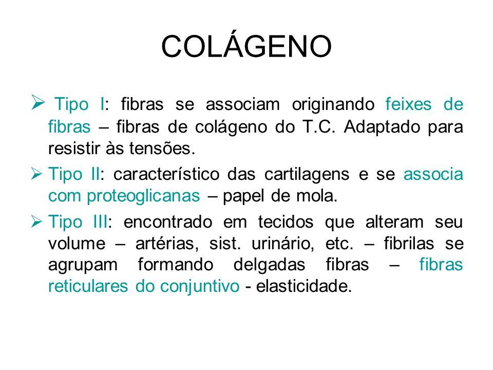 COLÁGENO Tipo I: fibras se associam originando feixes de fibras – fibras de colágeno do T.C. Adaptado para resistir às tensões. Tipo II: característic