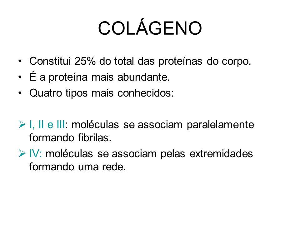 COLÁGENO Tipo I: fibras se associam originando feixes de fibras – fibras de colágeno do T.C.