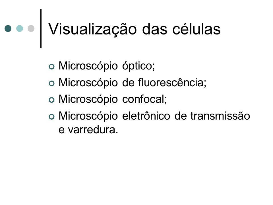 Visualização das células Microscópio óptico; Microscópio de fluorescência; Microscópio confocal; Microscópio eletrônico de transmissão e varredura.