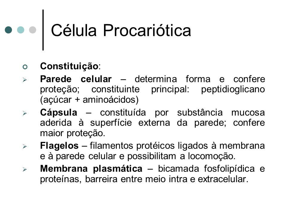 Constituição: Parede celular – determina forma e confere proteção; constituinte principal: peptidioglicano (açúcar + aminoácidos) Cápsula – constituída por substância mucosa aderida à superfície externa da parede; confere maior proteção.