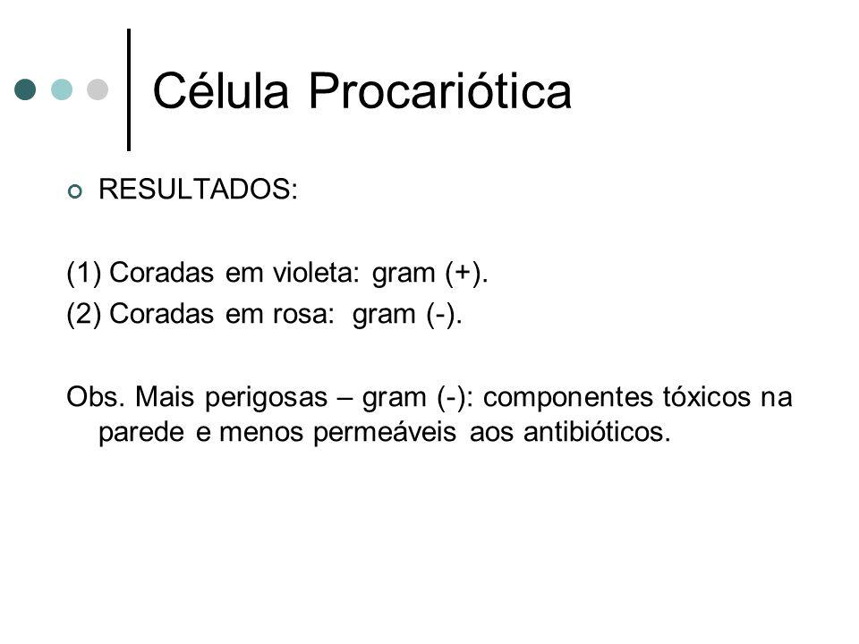 Célula Procariótica RESULTADOS: (1) Coradas em violeta: gram (+). (2) Coradas em rosa: gram (-). Obs. Mais perigosas – gram (-): componentes tóxicos n
