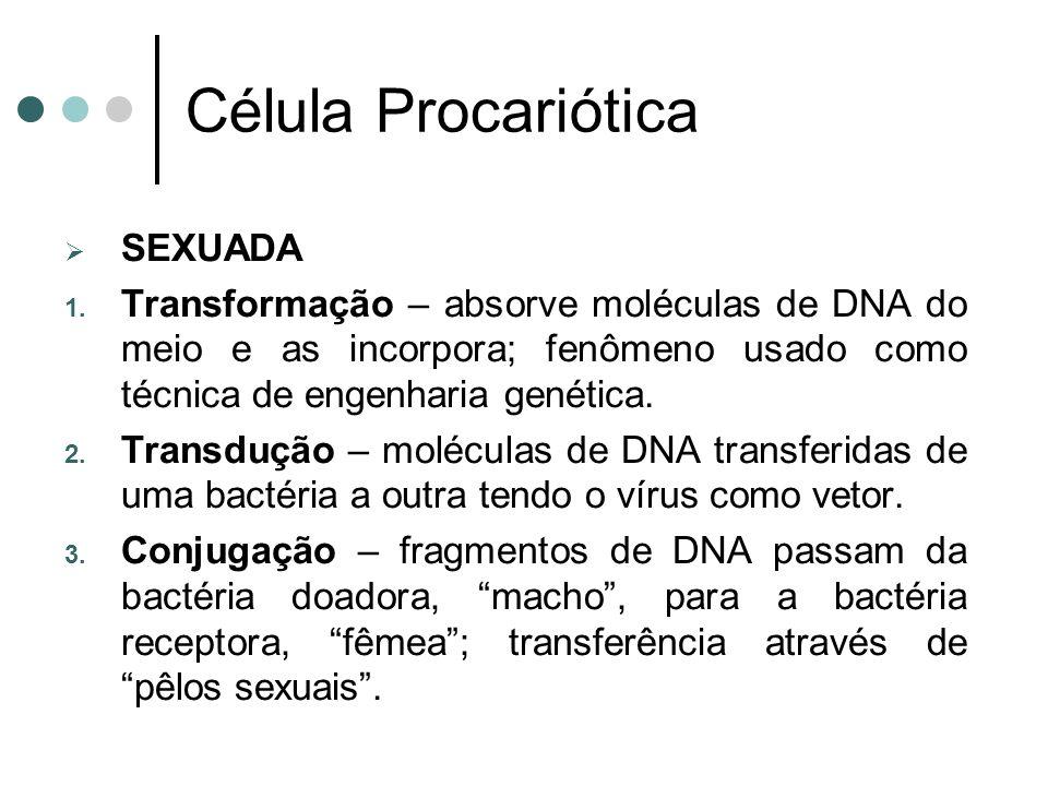 Célula Procariótica SEXUADA 1. Transformação – absorve moléculas de DNA do meio e as incorpora; fenômeno usado como técnica de engenharia genética. 2.