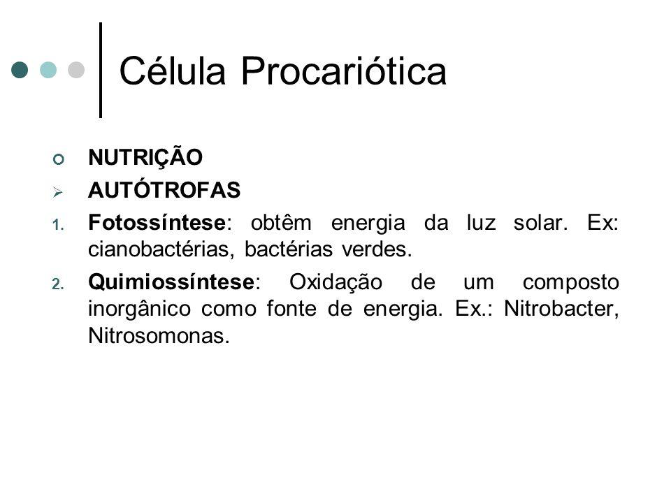 Célula Procariótica NUTRIÇÃO AUTÓTROFAS 1. Fotossíntese: obtêm energia da luz solar. Ex: cianobactérias, bactérias verdes. 2. Quimiossíntese: Oxidação