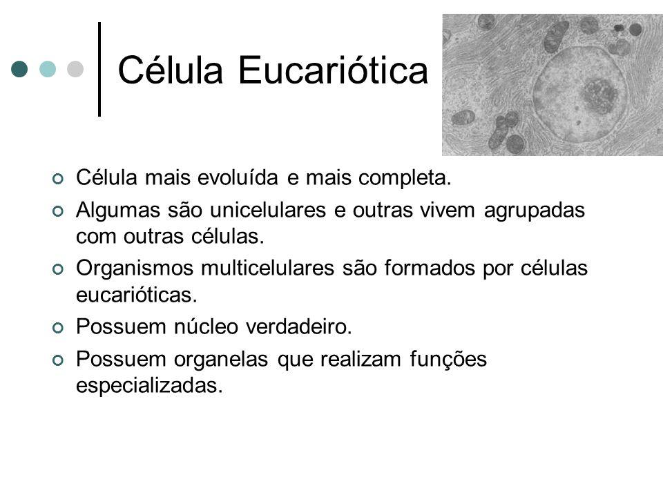 Célula Eucariótica Célula mais evoluída e mais completa. Algumas são unicelulares e outras vivem agrupadas com outras células. Organismos multicelular