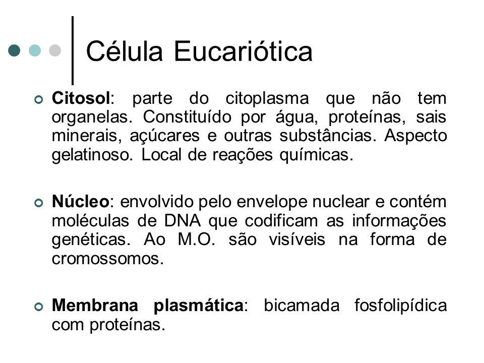Célula Eucariótica Citosol: parte do citoplasma que não tem organelas. Constituído por água, proteínas, sais minerais, açúcares e outras substâncias.