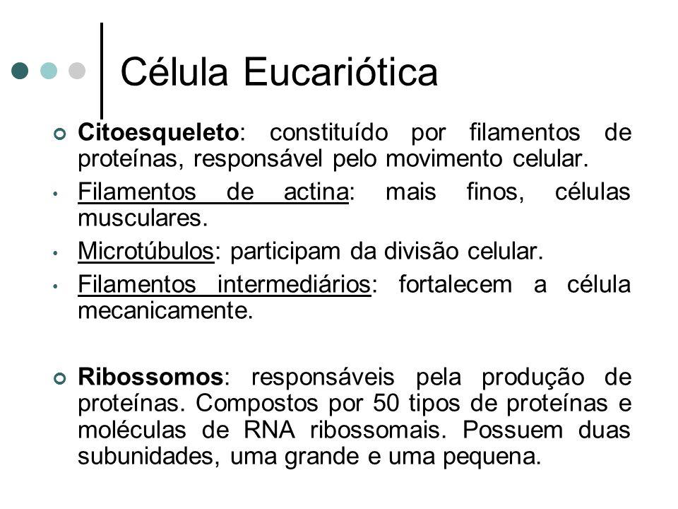 Célula Eucariótica Citoesqueleto: constituído por filamentos de proteínas, responsável pelo movimento celular. Filamentos de actina: mais finos, célul